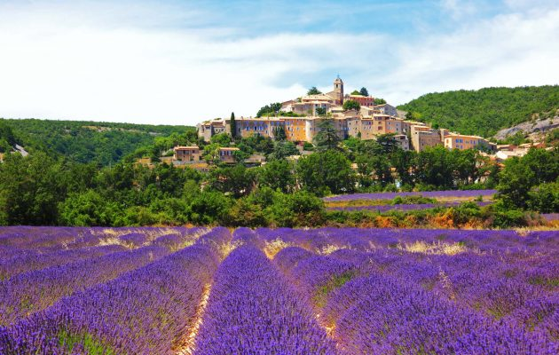 Guide to the Lavender Fields of Provence, South of France
