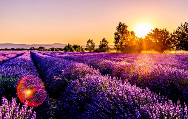 Incredible Lavender Fields in the South of France